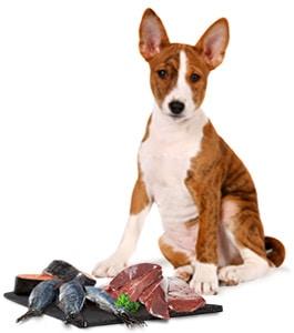 Spurenelemente im Hundefutter