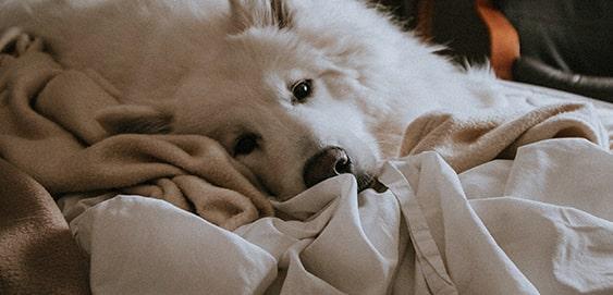 Hund in der Wohnung zu Silvester