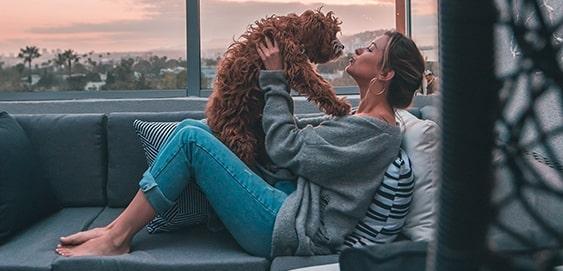 Hund und Mensch