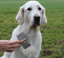 Hund wird gebürstet