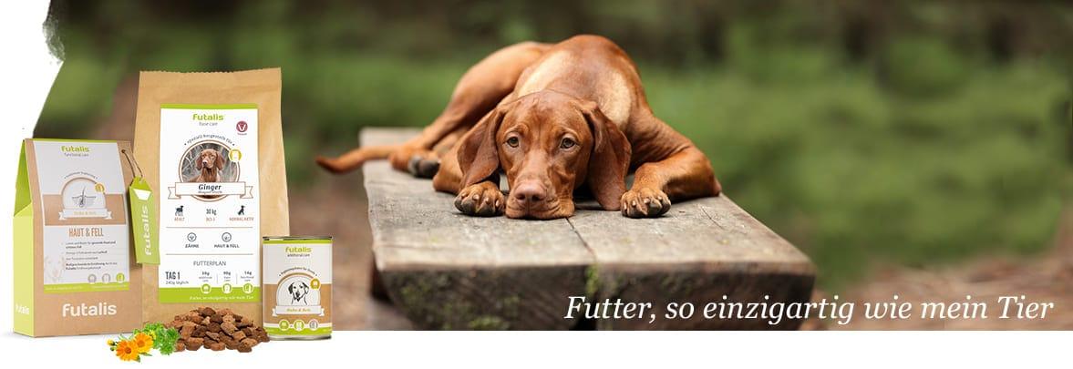liegenden Hund