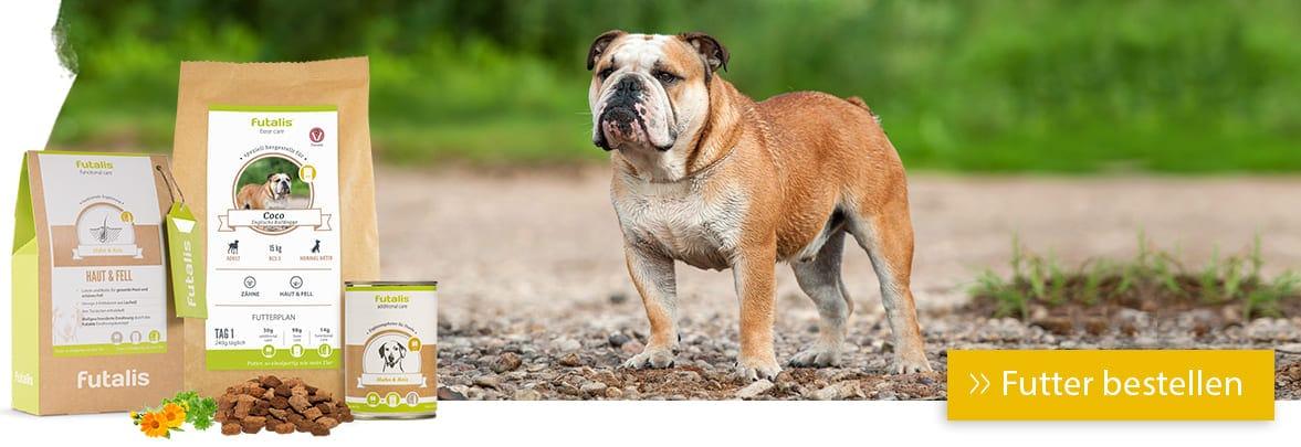 Rassefutter für englische Bulldogge