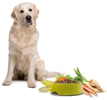 Faserstoffe in der Hundeernährung